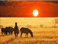 Güney Afrika - Safari Turu Emirateş Havayolları İle 25 Ocak 2020 Hareket!