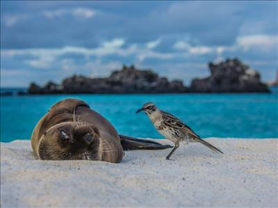 Kolombiya-Ekvador-Galapagos Adaları Turu