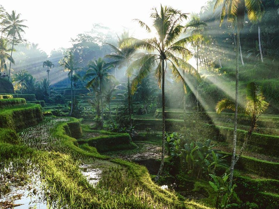 Singapur Bali Turu